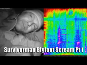 Survivorman Bigfoot Screams Part 1