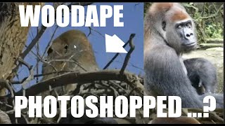 Ranchita Wood Ape NOT Photoshopped