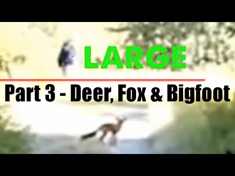 deer fox bigfoot video series part 3