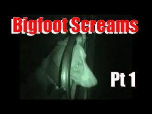 Sierra Bigfoot Screams Video - Dog Visibly Upset